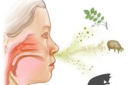 Раздражители аллергического насморка