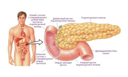 Размеры поджелудочной железы - это наиболее объективный признак, по которому можно определить наличие или отсутствие ее патологических изменений