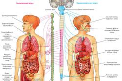Признаки дорсопатии грудного отдела позвоночного столба