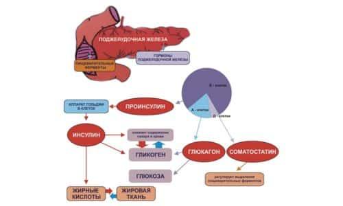 Гиперфункция возникает в организме при резком снижении количества глюкозы. Это провоцирует выработку гормона инсулина в больших объемах, которые организм не в состоянии нейтрализовать