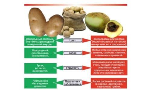 Признаки качественной картошки