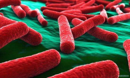 Некалькулезный холецистит начинается с того, что в полость ЖП попадает патогенная микрофлора и смешивается с желчью