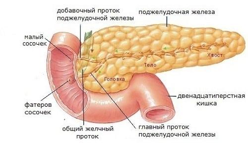 Схема строения поджелудочной железы