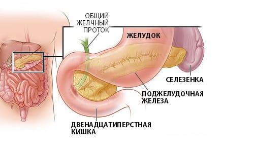 Анатомическое расположение поджелудочной железы