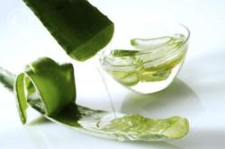 Лечебные свойства сока алоэ