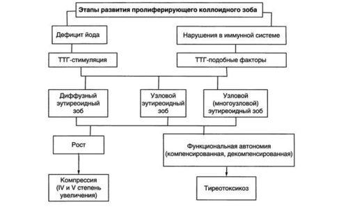 Этапы развития зоба